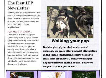 The LFP Newsletter Issue #1