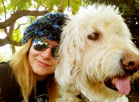 Why We Offer A Pack Walk For Dogs Who Need Help Socializing