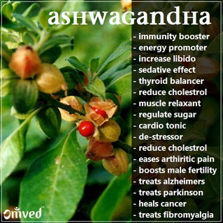 Botanical Briefer: Ashwagandha