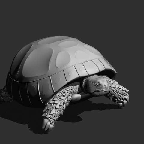 Trartaruga