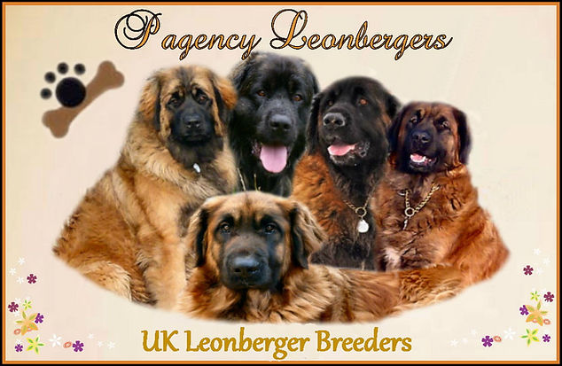 Pagency Leonergers UK