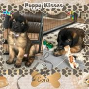 5. Cora 8 weeks