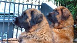 Kiki & Julz