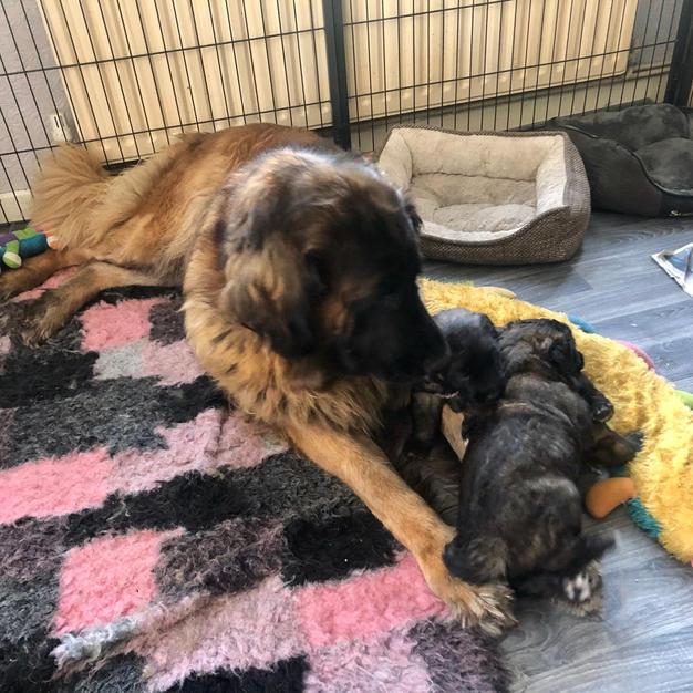 Holly & babes at 4 weeks