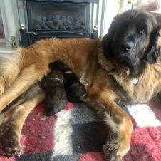Proud Mummy