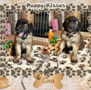 Cora/Vixen