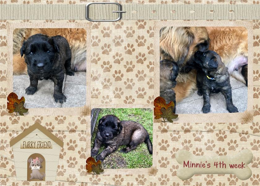 6. Minnie