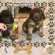 Bonnie 8 weeks