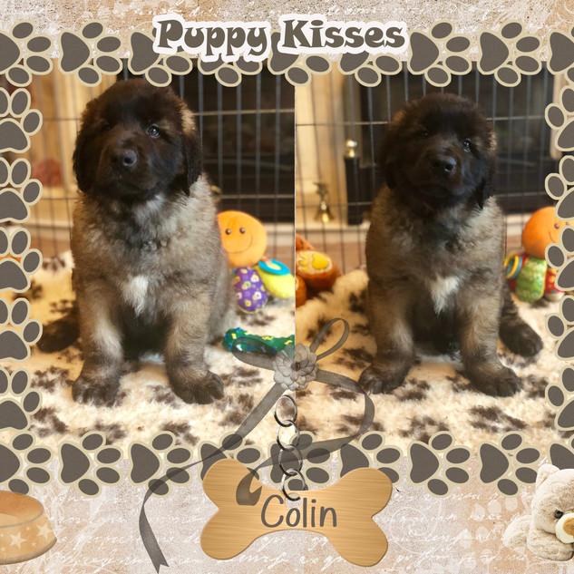 6. Colin 8 weeks