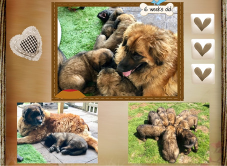 Pics on website  6 weeks old 💖