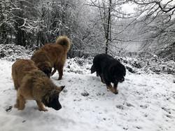 3 pups having fun