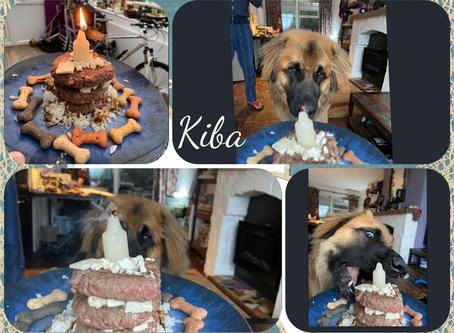Nikita & Finnley pups are 1 Year old