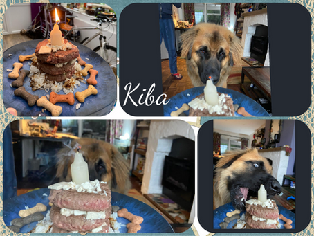 Nikita & Finnley pups are 1 Year old
