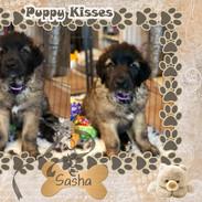 8.Sasha 8 weeks