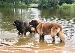 Zara & Chewie
