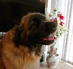 Tasha aged 3 years