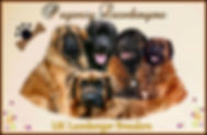 Uk Leonberger breeders of Leonbergers