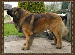 Aslan 3 years
