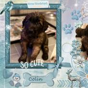 6. Colin