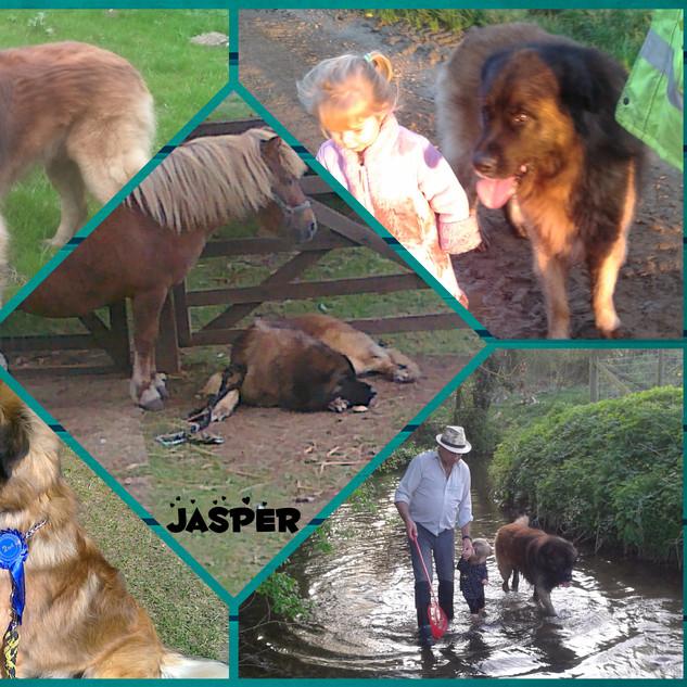 Jasper 10 years 2 months