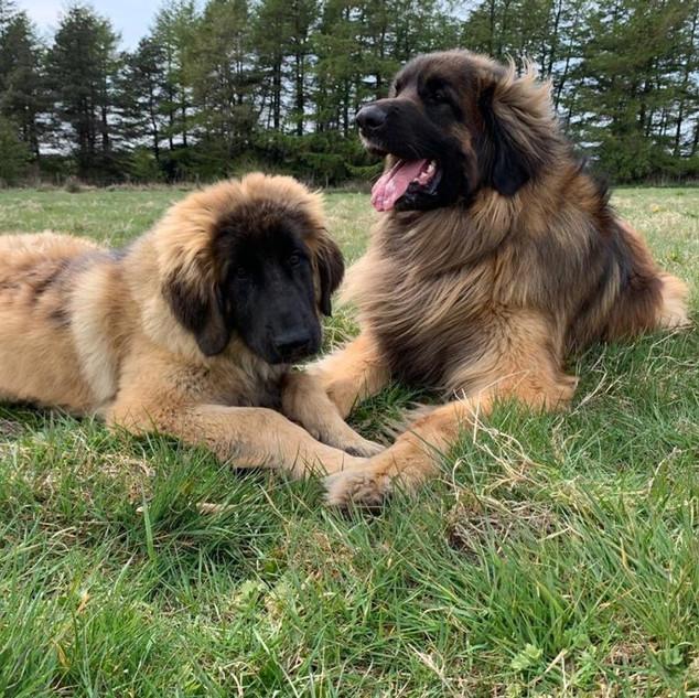 Milly & Saxon