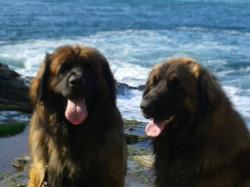 Aslan and Neo