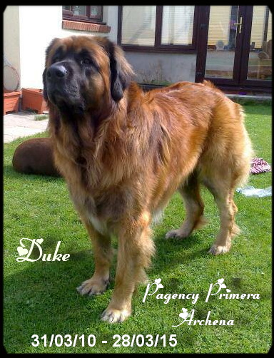 Duke 2015