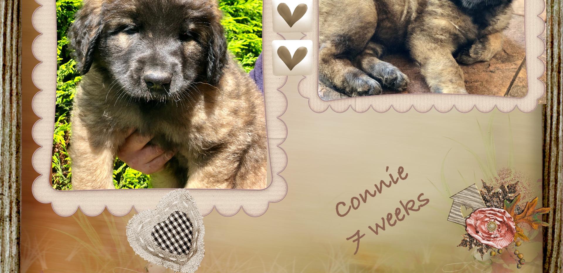 3. Connie