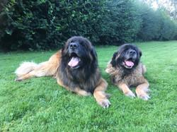 Aslan & Tasha