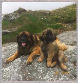 Aslan & Merlin June 2018