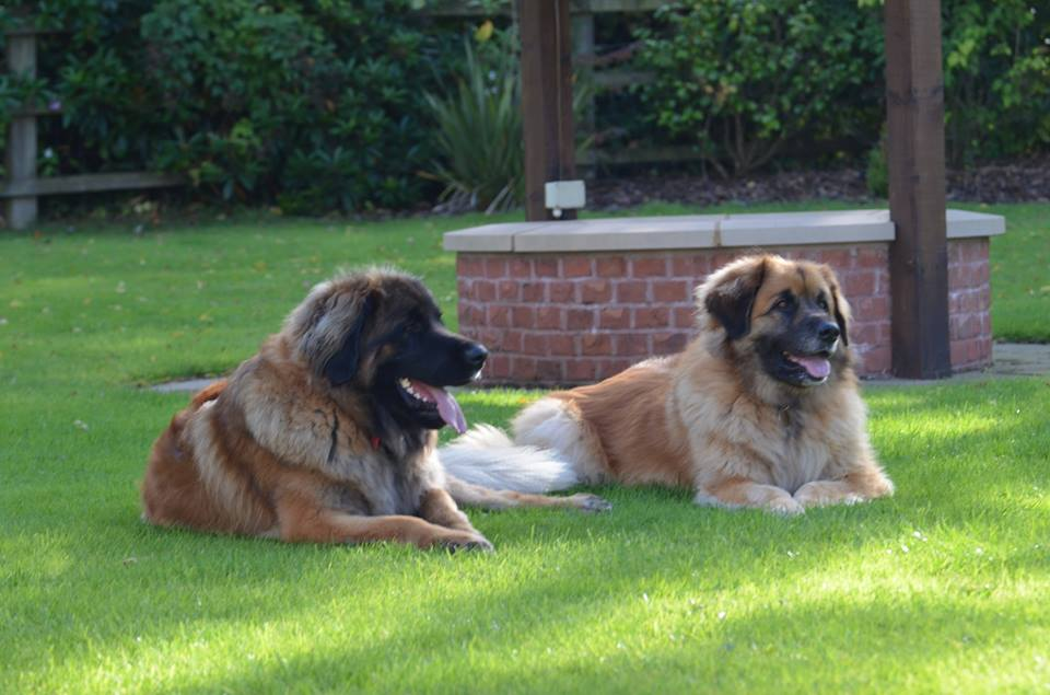 Roxy & Bella