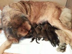 Alia and her babies.jpg