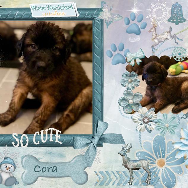 5. Cora