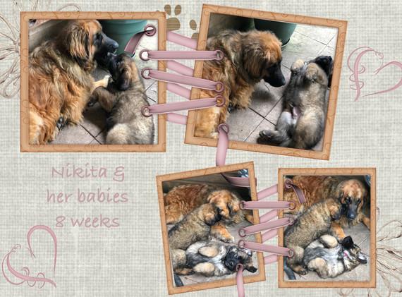 Nikita & Babes