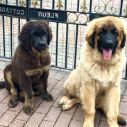 Coco & Merlin