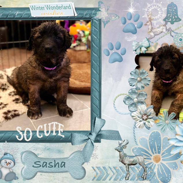 8. Sasha