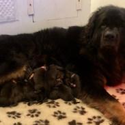 Coco & her babies