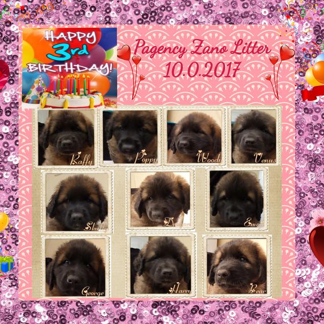 3rd Birthday for Zara & Neo pups