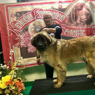 Best puppy In Breed