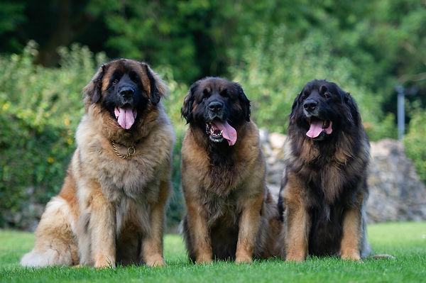 dogs  (6 of 91).jpg