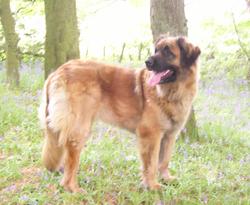 Elsa 2008