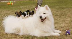 Arabela & puppies
