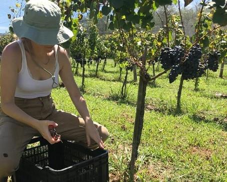 Campana será sede del IV Encuentro productivo vitivinícola bonaerense