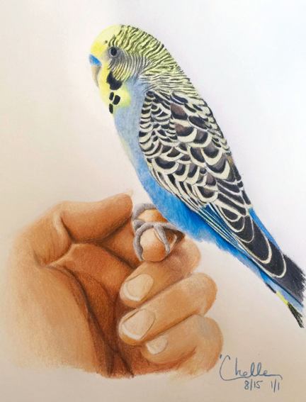 Practice drawing of a Parakeet
