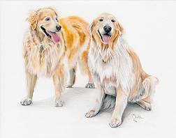 Golden Retrievers, color pencil portraits