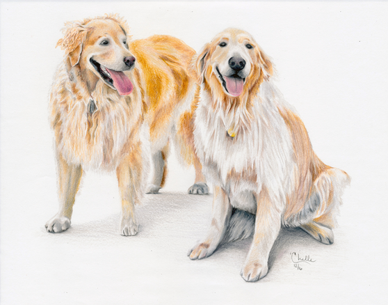 Maggie and Madison - Golden Retrievers