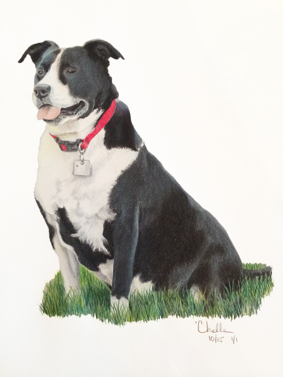 Lucy - Border Collie and Pit Bull mix