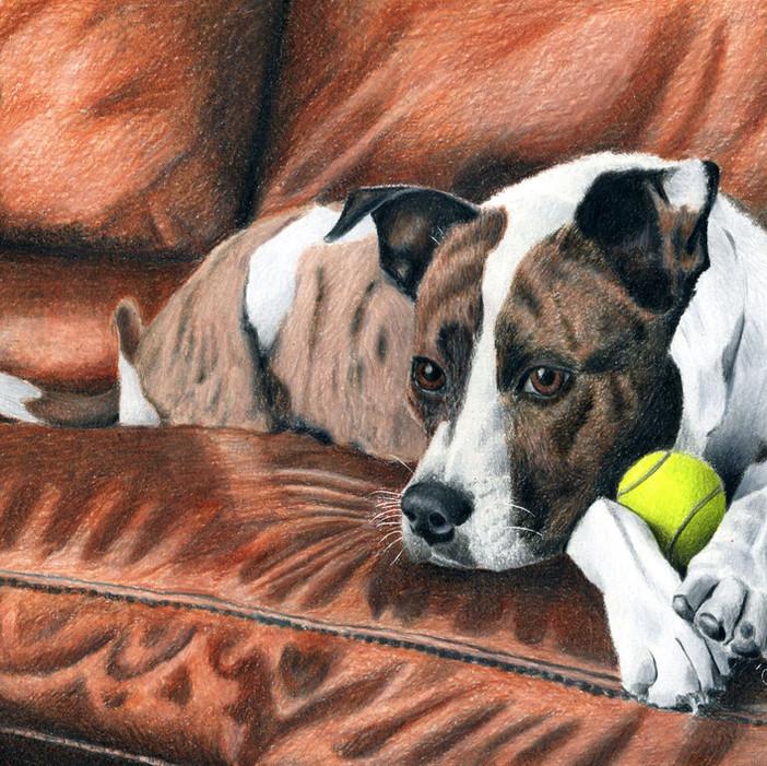 Pet Color Pencil Portraits