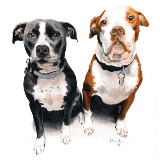 Luna and Apollo - Bull Dogs