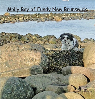 Molly #grandmanan #bayoffundy #pupontheroad #liveyourbestlife #chasinghappinessandsparksofmagic
